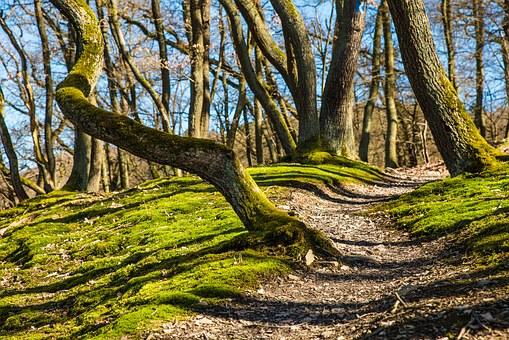 טיול ליער יתיר