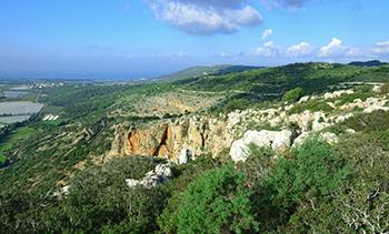 היער והייעור בישראל